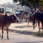 Muslims form 'Gau Seva Dal' to protect cows in Uttar Pradesh http://t.co/yq9gk6md9X http://t.co/RxTPIoQger