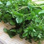 【食べずに残すなんてもったいない!  最強のスーパーベジタブル「クレソン」の健康パワーに迫る!】 http://t.co/pPR1BLjSlW ローストビーフやステーキなどの肉料理に、ちょこっと添えられている緑の野菜「クレソ.. http://t.co/FgqGk4UYkY