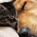 Только давай по честноку У меня дома живет кот - ретвит У меня дома живет собака - избранное http://t.co/jxugaTl9QR