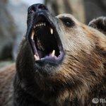 Прогулки в детсадах запретили в поселке Амурской области из-за медведицы http://t.co/Dbdp1ouPKT http://t.co/eXXn4Dann2