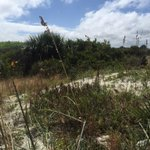 #ICYMI Here's the deal with the rattlesnakes @ Smyrna Dunes Park. http://t.co/kWzHvtDNpF #FOX35 http://t.co/EJzR4gZVrq