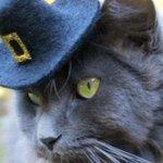 Autumn/Winter 2015 headgear – but for cats http://t.co/K9dU6666VX http://t.co/6IwelYS4GC