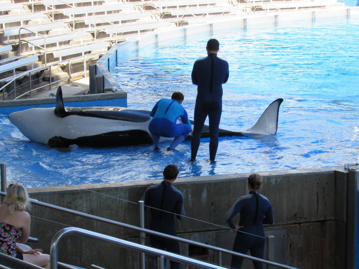 RT @oceanadvocatefl: Final push 2 END #BLACKFISH BREEDING before petition gets sent 2 CCC  No Blue World Project http://t.co/1N2PRD2XCF htt…