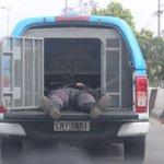 Imagem mostra PM dormindo com fuzil na mão em carro da polícia no RJ http://t.co/JjsP1CvVoF #G1 http://t.co/lUckbS7qE1