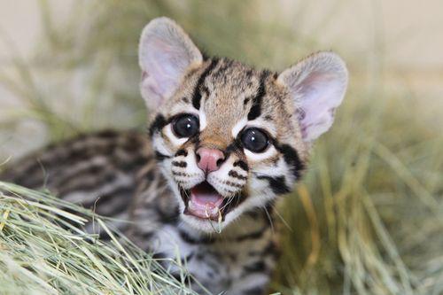 Some Senators don't believe saving endangered species is important. We need @POTUS to #VetoExtinction http://t.co/ZNaGh4U5d6