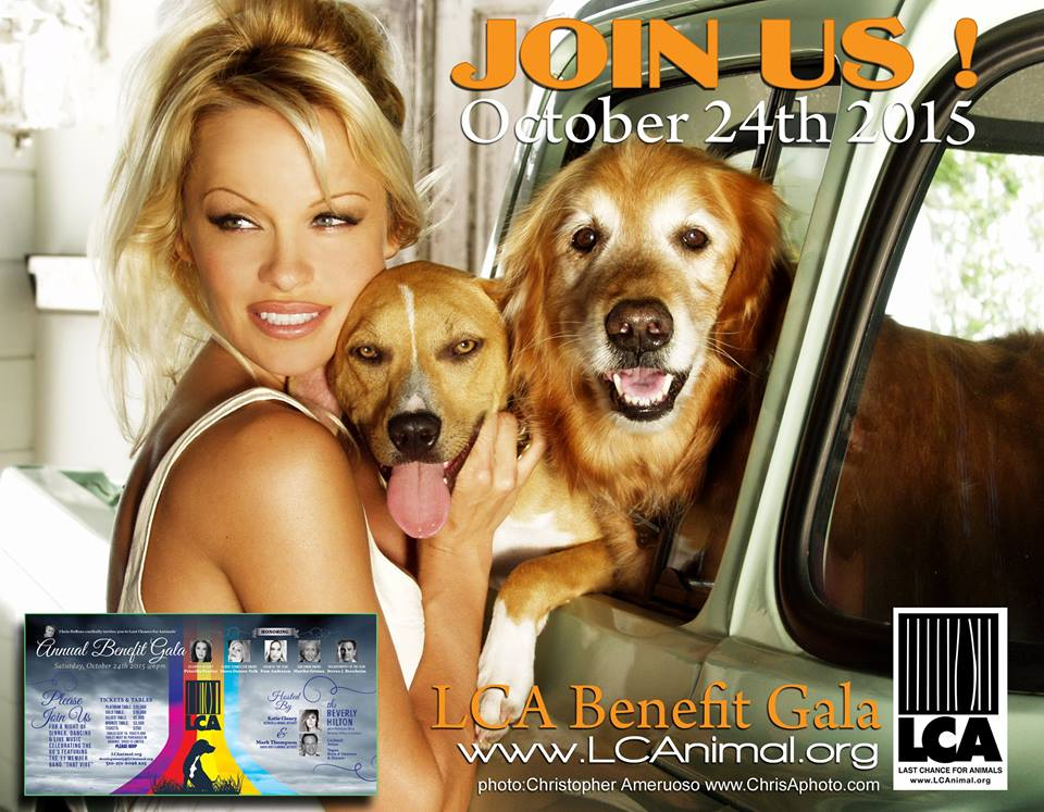 RT @LC4A: LCA's Gala is 10/24/15.  We will honor @pamfoundation as Vegan of the Year. Join us for an incredible night! http://t.co/ZWJzS54q…