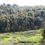 Nepals #forests under threat over #fuel crisis. Via @bbcscitech http://t.co/K1WP5RPJjq http://t.co/rHdw5g9sxZ