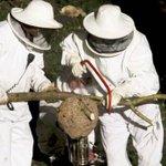 #Bizkaia/ La avispa asiática frenará en año y medio su expansión en Bizkaia http://t.co/XNcPIVJofw http://t.co/naPhAu2dQv