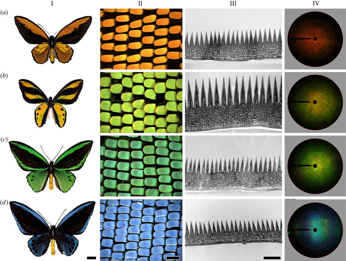 Why do closely related butterfly species have dramatically different wing patterns? http://t.co/aCvMFDJGDV http://t.co/gSl0eTuwSL