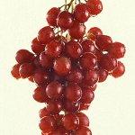 Efeito anticancerígeno de substância da uva roxa é maior em dose pequena http://t.co/90vK4NOrJm #G1 http://t.co/3dbfITfMRc
