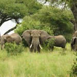 Scientists discover why elephants rarely get cancer http://t.co/9JoGxaJ96F http://t.co/et2Dy0OaeQ