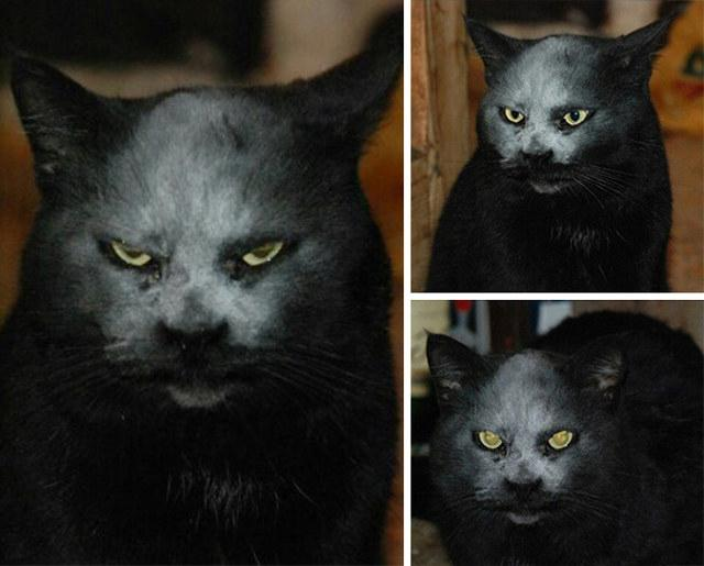 Cat sticks its head in a bag of Flour, looks like demonspawn: http://t.co/tQSXNAZaZ9 http://t.co/a69Fp8g2BO