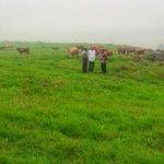 Pembibitan sapi unggul di Lima Puluh Kota harus diduplikasi di berbagai daerah agar kita tidak impor sapi lagi -Jkw http://t.co/5r2R8xLBfv