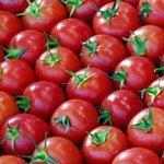 """أسعار الطماطم تعادل 50% من جرام الذهب بعد وصول سعر الصندوق منها إلى """"60 ريال"""". #السعودية - http://t.co/4NbxT3BfY8"""
