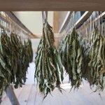 Legislature approves new medical marijuana rules #vtpoli #Vt http://t.co/xbt6h0vjK7 via @bfp_news http://t.co/qHDA2kYSAh