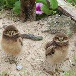 Morador cria reserva no meio da praia para salvar animais e local vira atração http://t.co/16NrpgYApd #G1 http://t.co/SDsZVUsIkY