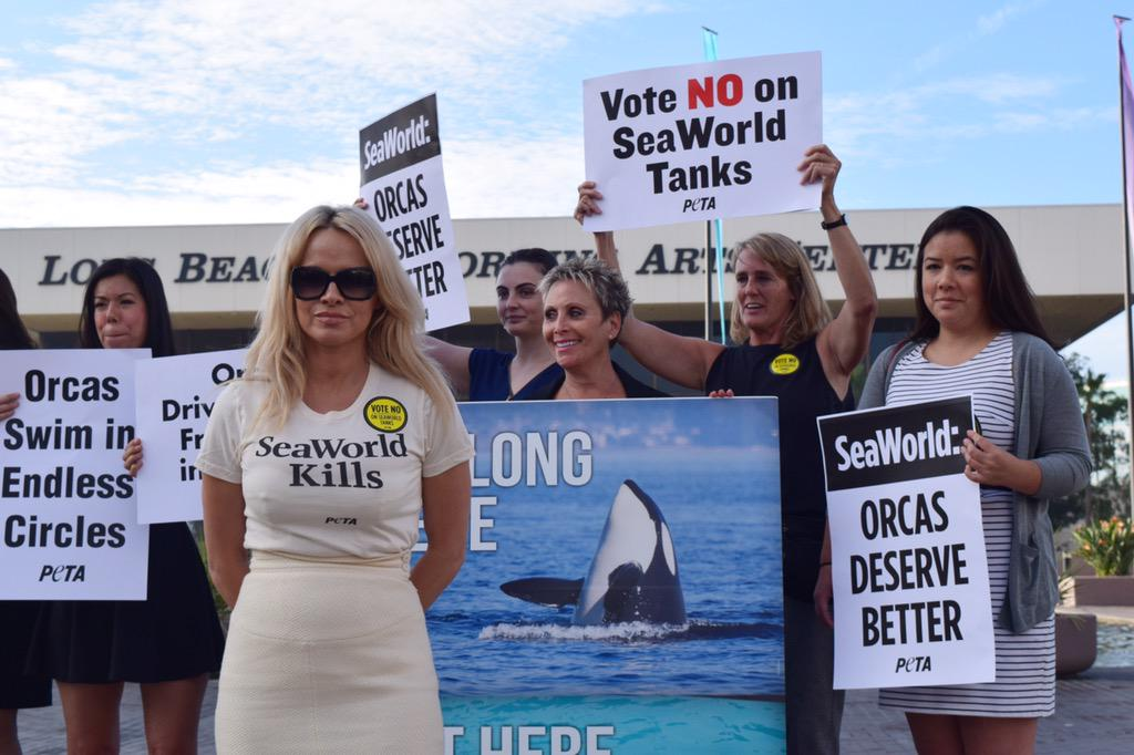RT @peta: PETA Honorary Director Pam Anderson is here to speak out for orcas! http://t.co/qjUwwMMMHb