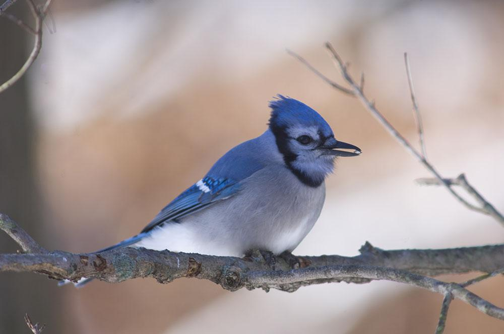 Our favourite bird of the day. #GoJaysGo http://t.co/lt52eGK3Er