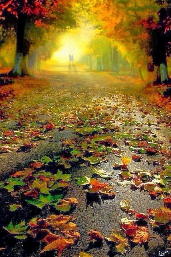 Es otoño. https://t.co/wO4iUTQ43K