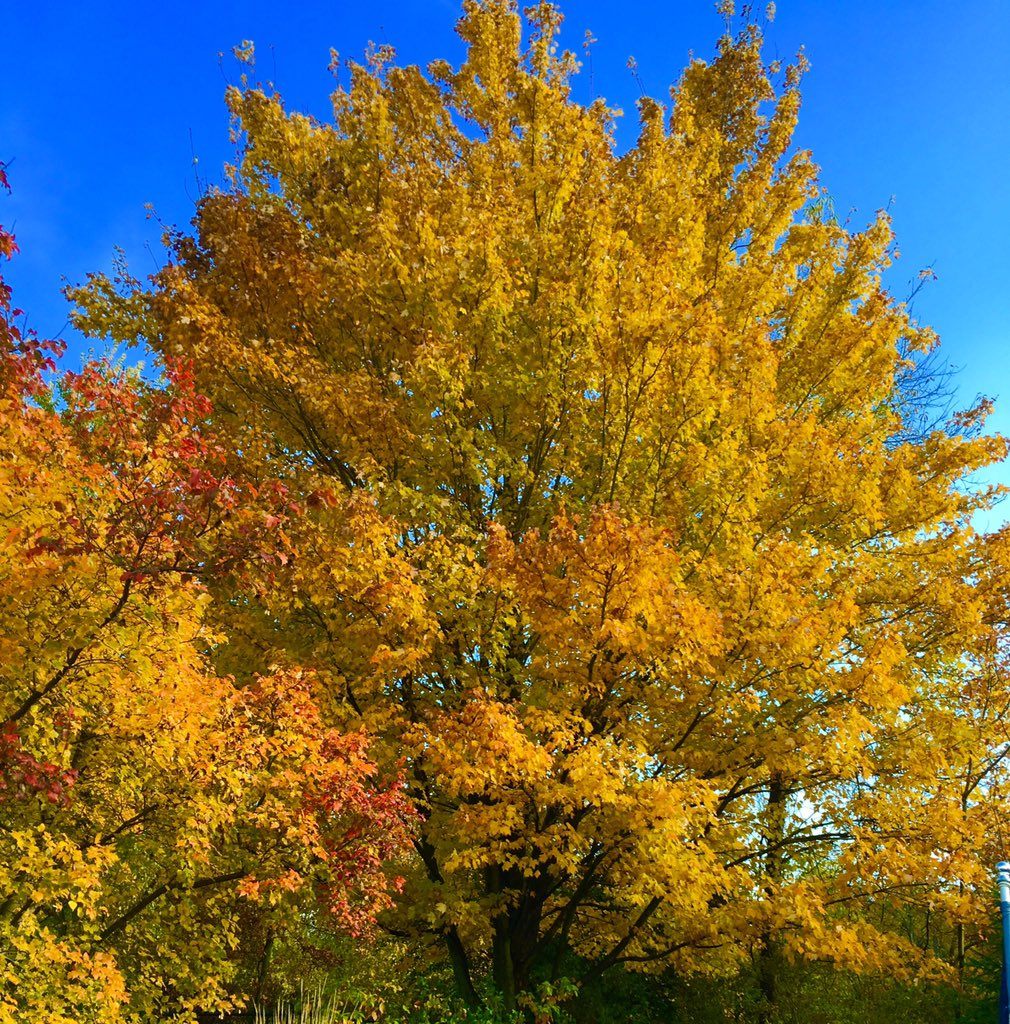 Turned into a beautiful day after the early morning rain. And still have fall colors to enjoy. https://t.co/0UGHF68jeF