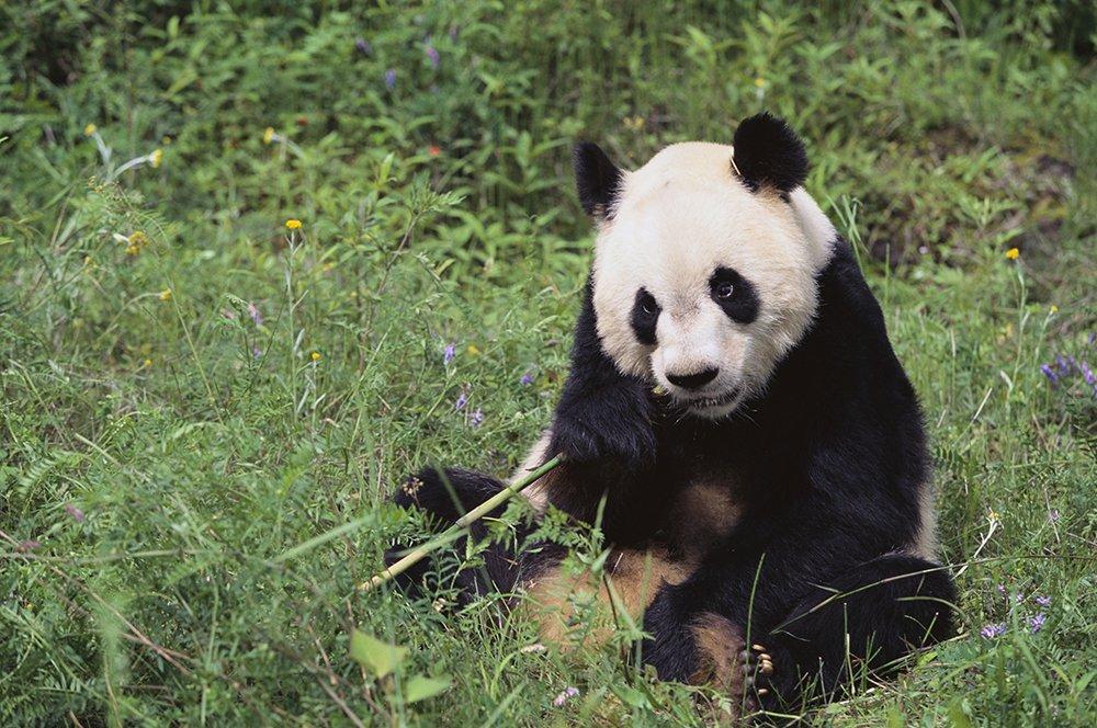 'Loggers in China destroying parts of panda sanctuary' This must stop! #panda https://t.co/c8GcSkh4JM https://t.co/Q3lwliks0L