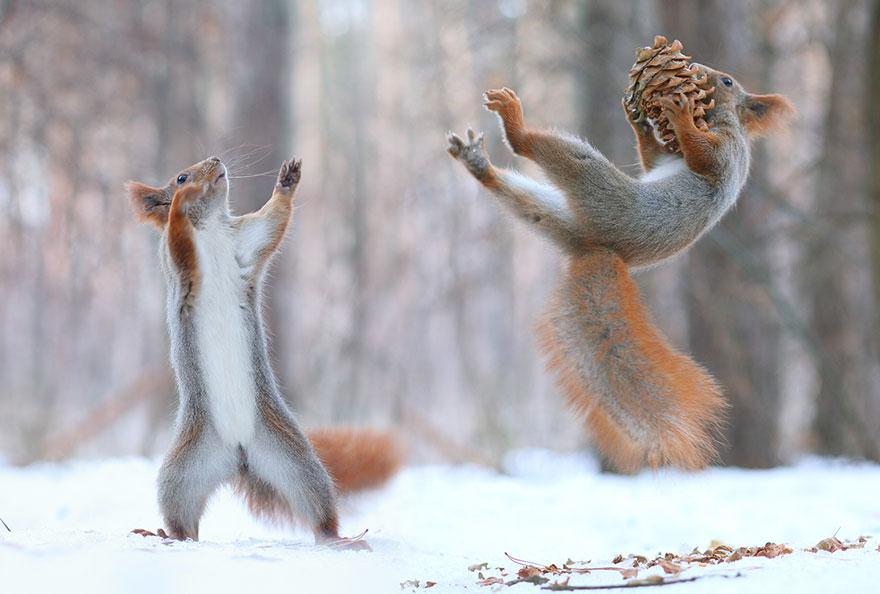 Russian Photographer Captures The Cutest Squirrel Photo Session Ever http://t.co/RaHZ1QiMkJ http://t.co/kri2pqeRh4