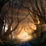 Northern Irelands #DarkHedges named as one of the worlds most beautiful tree tunnels : https://t.co/L5ym01h9Fn.… https://t.co/0rgerkybJn
