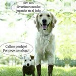 Un poco de humor perruno... http://t.co/qXd07OO1Ig