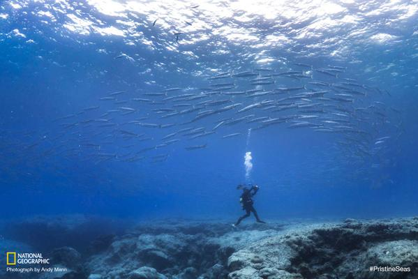 Joe Lepore—a master diver—finds himself in the midst of a massive school of barracuda. #PristineSeas http://t.co/TiwiyGsJFF