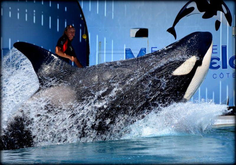 RT @DolphinPaige: #Blackfish Valentin wasn't even safe in the tanks that were his home #MarinelandAntibes http://t.co/HBtfiEBYVg http://t.c…