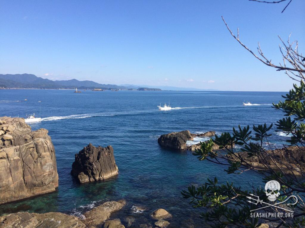 RT @CoveGuardians: 0923am: All 12 boats have entered the harbor empty, after the pod fought hard to keep their freedom.   #tweet4taiji http…