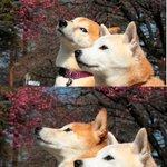 quando você tá olhando pra crush e disfarçando http://t.co/lkyOkbCwSG