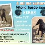 Comparte/RT mi afiche porfavor porque sè que en algun lugar,hay un hogar para mi. Gracias!! #ElQuisco #Chile :D http://t.co/pOcL2NX39T