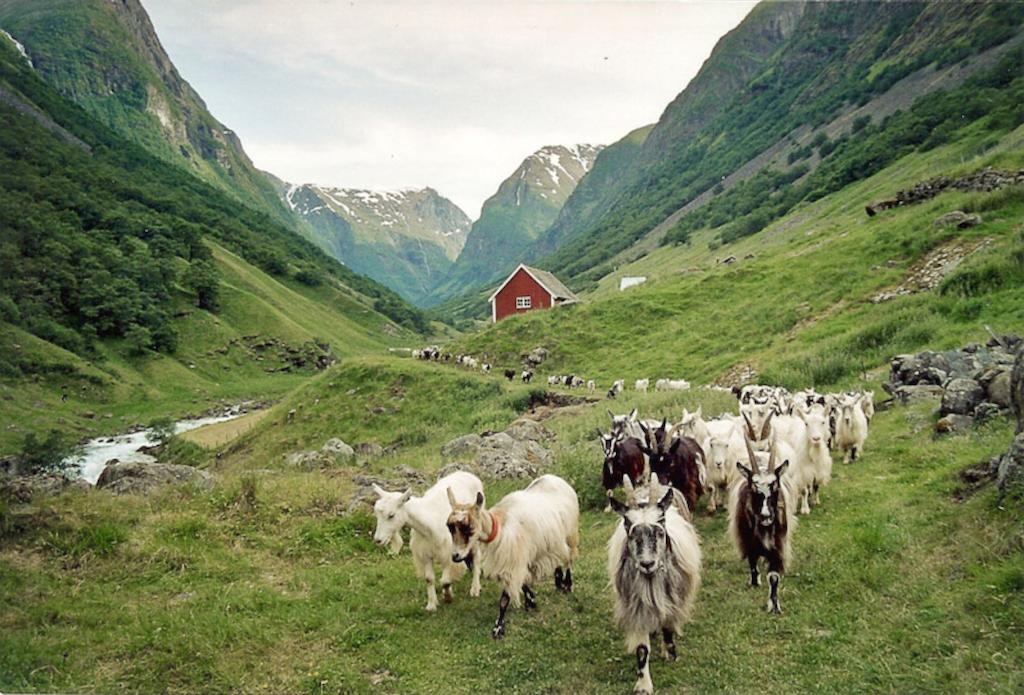 Bergen - Off The Beaten Track http://t.co/3xCRMgbndW  @visitnorway @VisitnorwayUSA @VisitNorwayUK http://t.co/lnG7KKVBLu