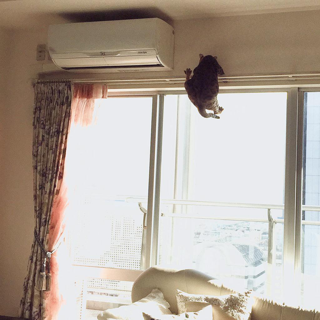 足の指がパーの形の時の猫は大変深刻な状況 http://t.co/ar1nwLjgPl