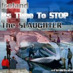 #Iceland the slaughter for profit of #endangered fin whales is notacceptableanymore! #OpWhales https://t.co/eQOXW98aKU