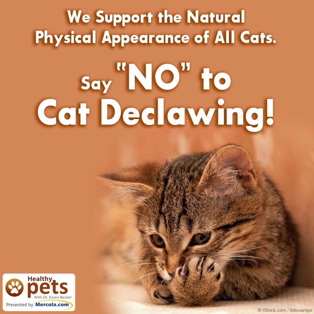 Help me educate pet guardians that declawing hurts cats! Please share my article with them: http://t.co/0svy0fGBEb http://t.co/LazqUtFNzG