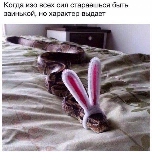 )) натуру не спрячешь ) http://t.co/p8wpCOSo42
