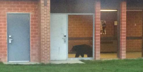 Bear wanders into Bozeman High School: http://t.co/eDgqZsjDt8 http://t.co/wo7zu4cSEH