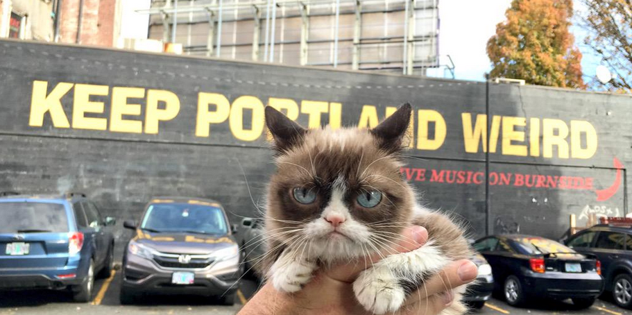 ALERT!  @RealGrumpyCat is in #PDX right now! http://t.co/wkWcMM8InS