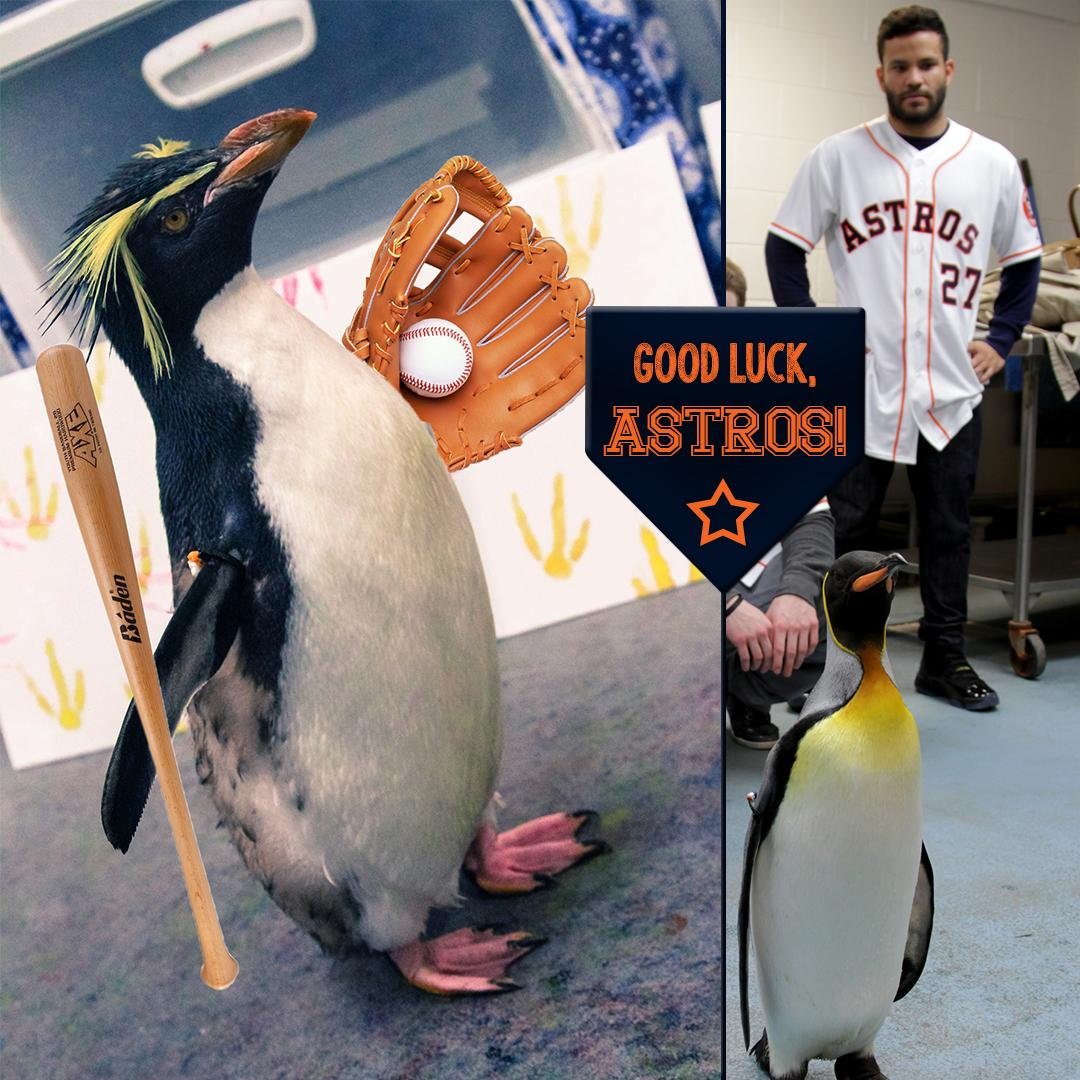 Our penguins want to wish their friend @JoseAltuve27 and the rest of the @Astros good luck tonight! http://t.co/UEoDwapMPG