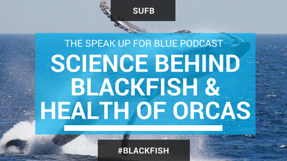 Do scientific studies conclude #orcas are healthy when held captive? @fromdolphview answers http://t.co/AmCu4RHtSM http://t.co/DJySoK507W