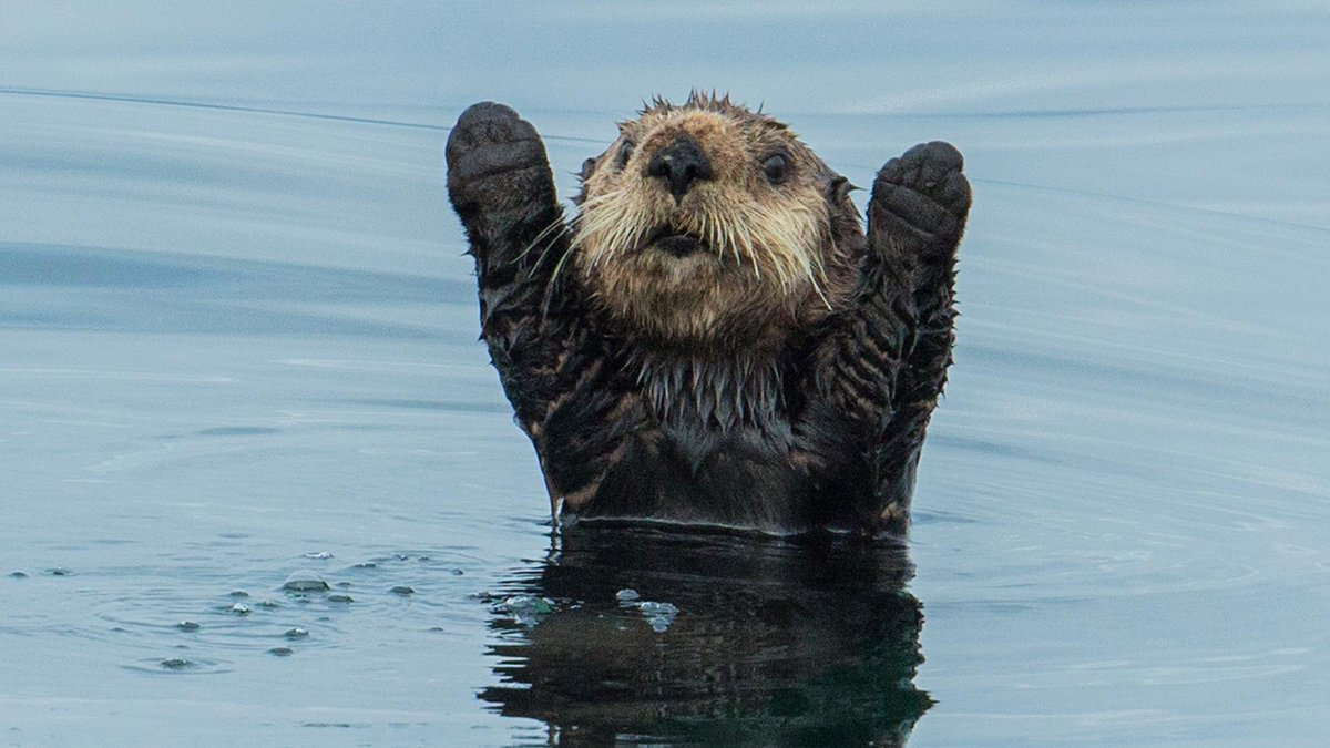 You know what? You made it through today.  #celebrationotter is proud of you. http://t.co/9J58PsKciY