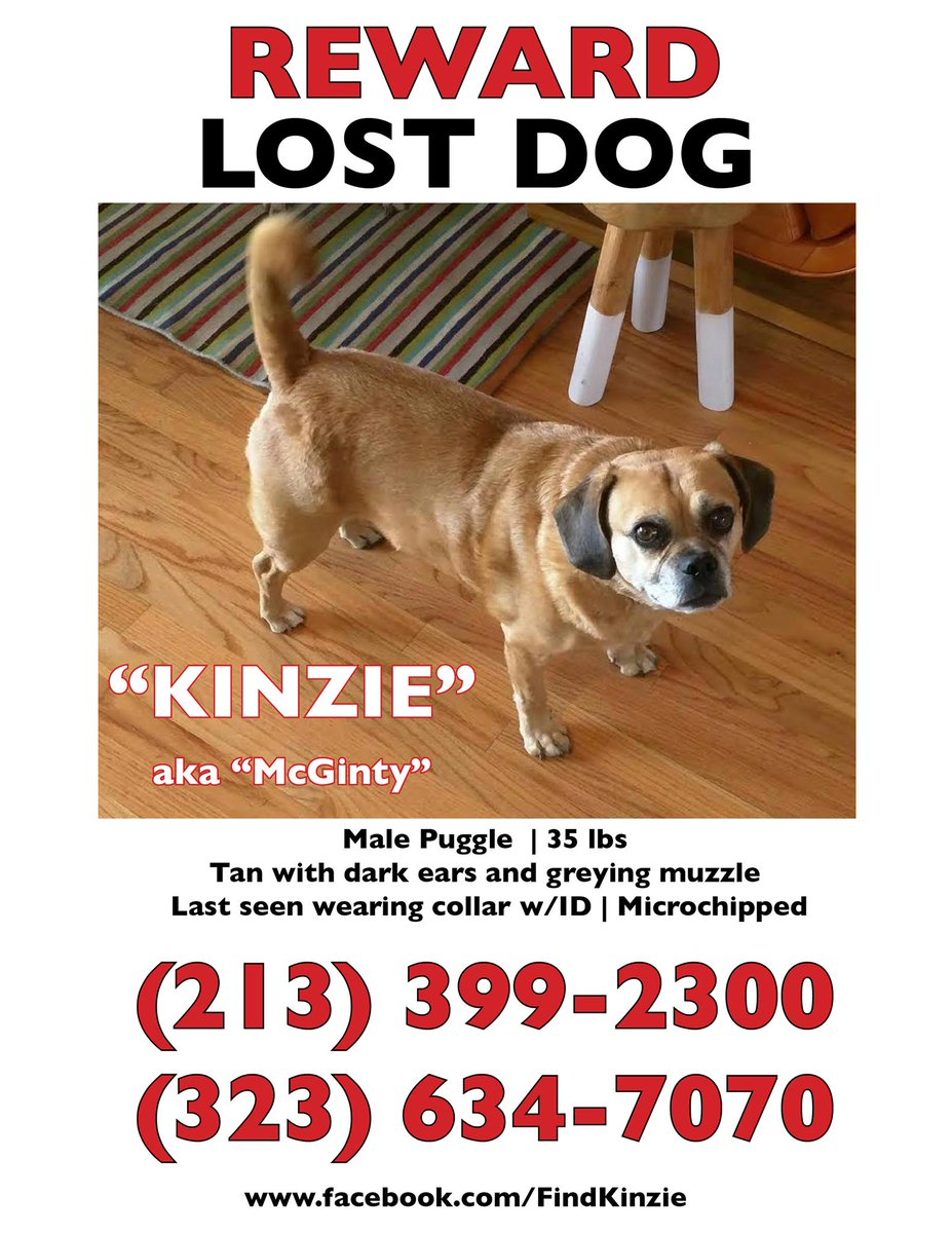 Lost dog in #SilverLake. Have you seen? #lostdog #eastside #LA #Atwater #LosFeliz http://t.co/bYUkbmsIVc