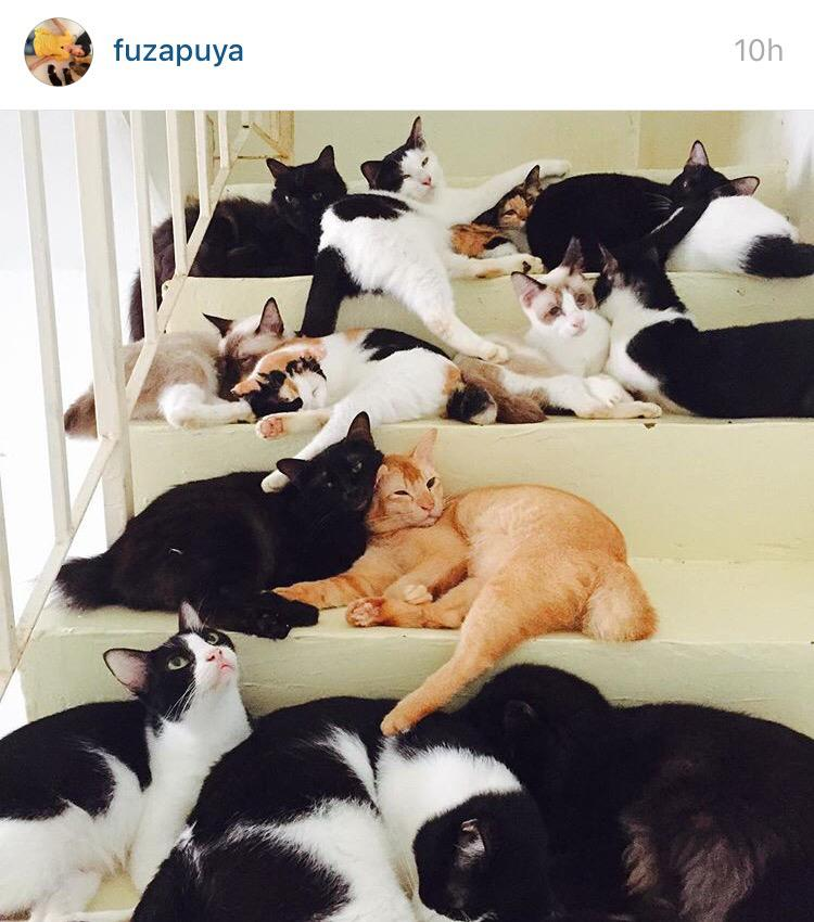Omg she has 31 cats uols. Selonggok kucing! http://t.co/9OvW4eluKY