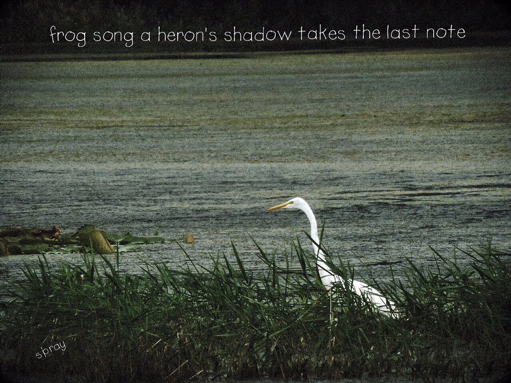 frog song a heron's shadow takes the last note #haiku #nahaiwrimo https://t.co/d6jjJXgzC4