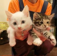 明日10/17(土)は県の保健所犬猫譲渡会。参加犬猫が続々やってきました。福島・三春シェルター通信 http://t.co/vX5meMmzdl http://t.co/1oTLI459Oh