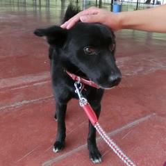 「保護犬や保護猫の譲渡会が初めての方でも、保健所の担当職員さんがおりますから性格や飼い方など どんどん聞けますよ!」あした10/17は三春シェルターへ。みんなカワイイ。http://t.co/vX5meMmzdl http://t.co/x0qOmHBmIl