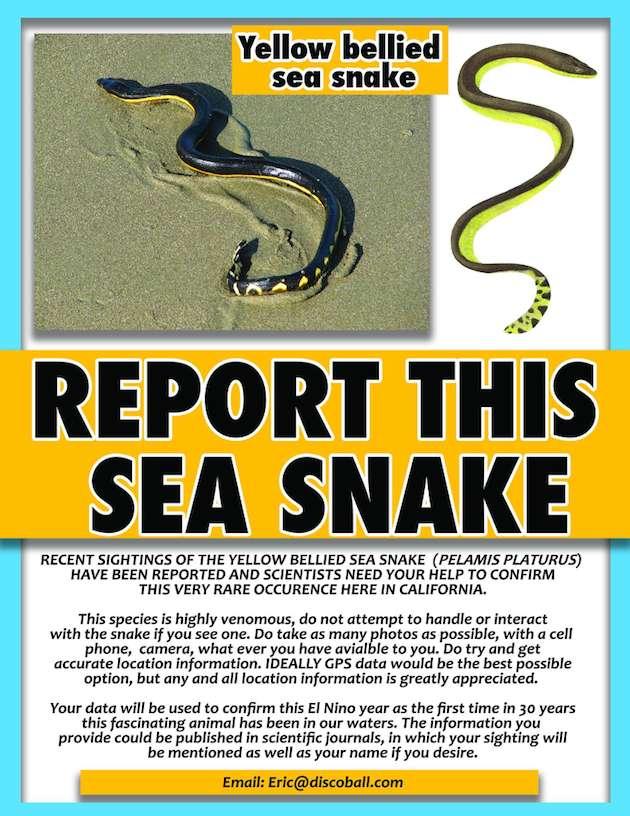 Venomous sea snakes arrive with El Niño. Do not touch. Do report.   http://t.co/6SePmyTxEZ http://t.co/bOk1nizkFV