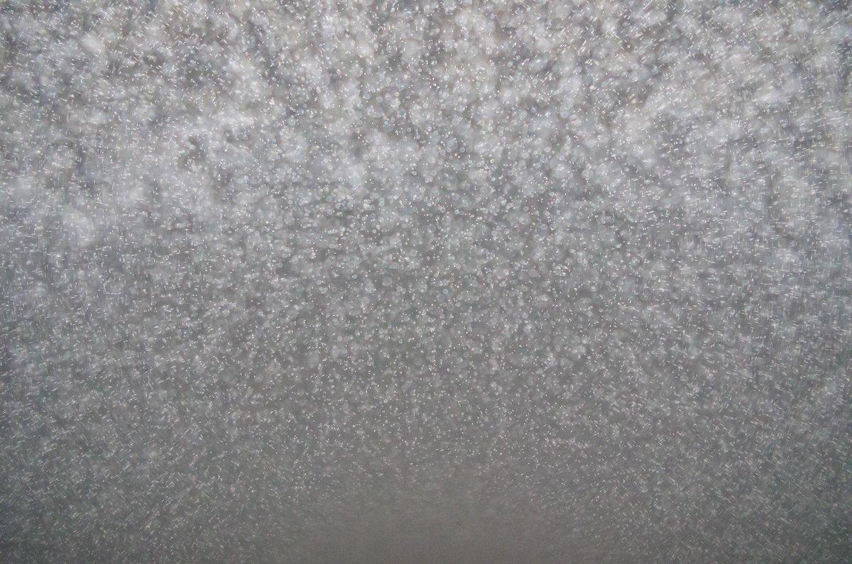 霧の中をフラッシュで撮った写真 つぶつぶが綺麗 http://t.co/z3IkbxkLMF